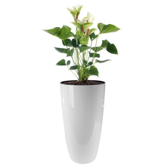 Macetero elho brusels diamond blanco flor y planta - Maceteros de interior ...