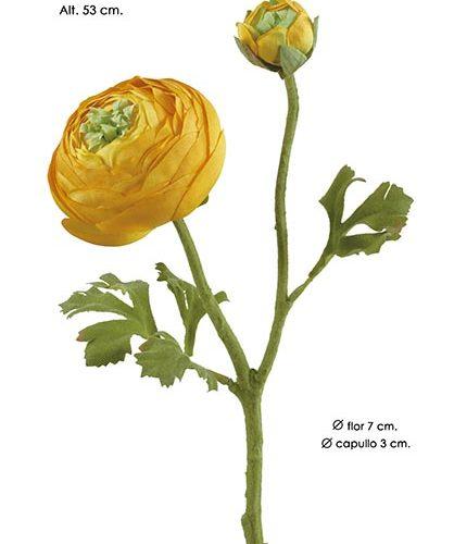 RANUNCULUS 1+1. 53 CM. AMARILLO.