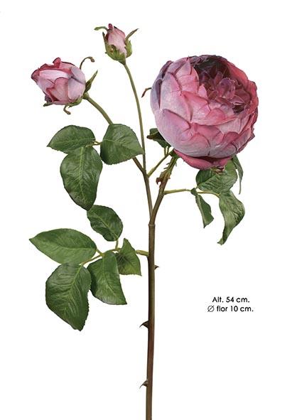ENGLISH ROSE. 54 CM. CEREZA.