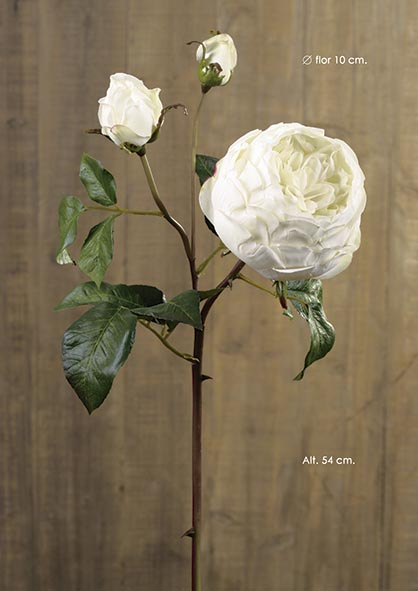 ENGLISH ROSE. 54 CM. CREMA.