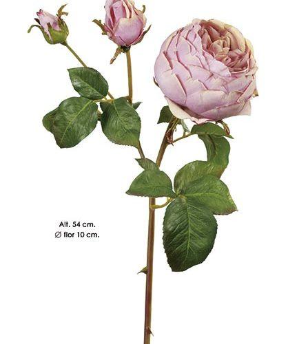 ENGLISH ROSE. 54 CM. MALVA.