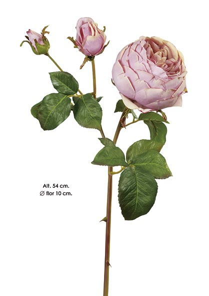 ENGLISH ROSE. 54 CM. MALVA.