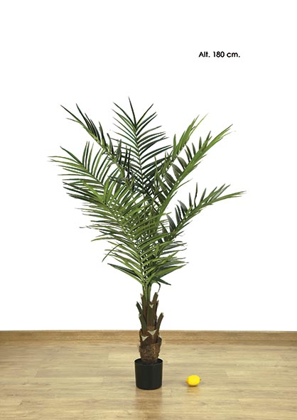 KING PALM  X 8 - 334 H. 180 CM. VERDE.