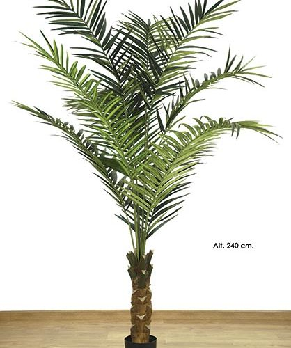 KING PALM  X 10 - 540 H. 240 CM. VERDE.