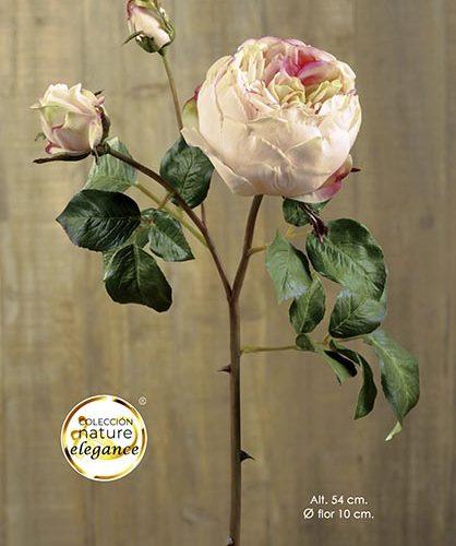 ENGLISH ROSE. 54 CM. Tƒ.
