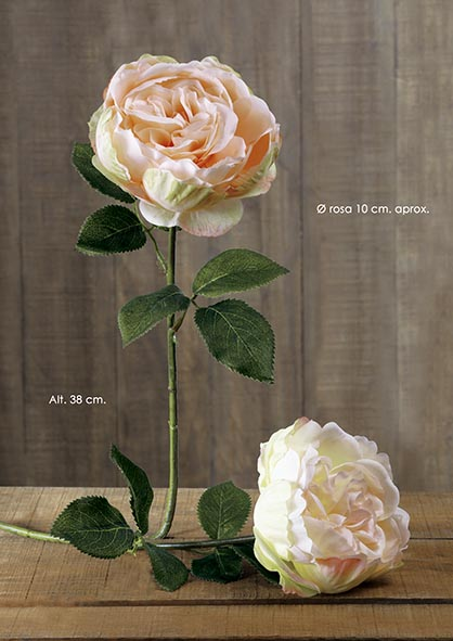 SINGLE ENGLISH ROSE. 38 CM. SALMîN.