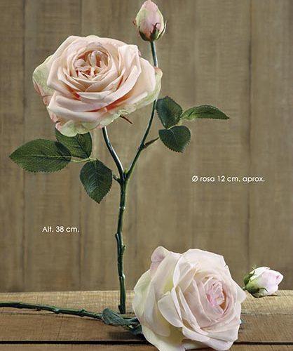 HOLLAND ROSE X 2. 38 CM. SALMîN.