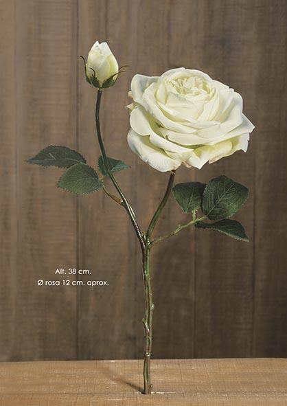 HOLLAND ROSE X 2. 38 CM. CREMA.