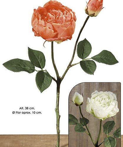 ENGLISH ROSE X 2. 38 CM. CREMA.