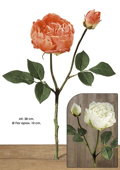 ENGLISH ROSE X 2. 38 CM. CREMA.