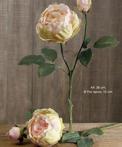ENGLISH ROSE X 2. 38 CM. SALMîN.