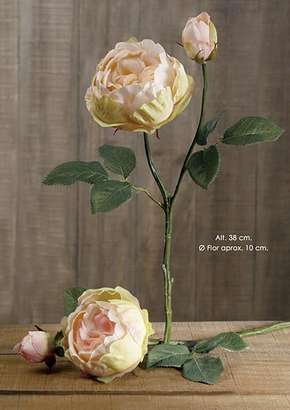 ENGLISH ROSE X 2. 38 CM. SALMîN.