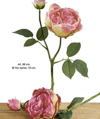 ENGLISH ROSE X 2. 38 CM. CEREZA.