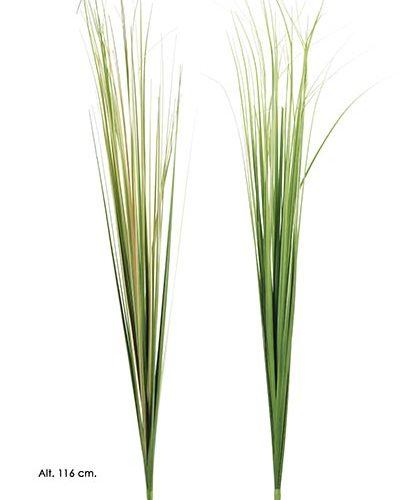 "RAMA GRASS. 116 CM. OTO""O."
