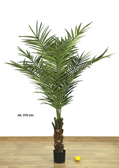 KING PALM  X 9 - 423 H. 210 CM. VERDE.