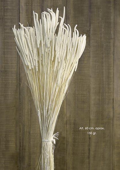 MAZO PHLEUM. 150 GR. BLANCO
